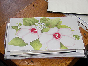 Hibiscus Half-Fold Greeting Card